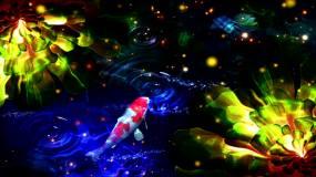 池塘鱼儿视频素材