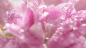 唯美的花世界视频素材