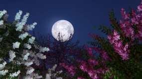 中秋月光月亮花好月圆视频素材