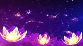 4K光影蝴蝶荷花舞台循环视频素材