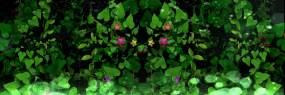 藤蔓长花蔓延无缝衔接循环视频素材