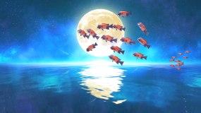 唯美鱼群月亮4k(6)-无缝循环视频素材
