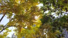 秋叶,唯美视频素材