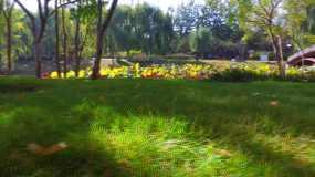 【4K】秋天的树林延游园金秋视频素材