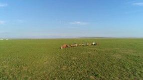 草原牧民游牧迁徙4K航拍视频素材