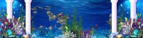 唯美的海底世界宽屏背景视频视频素材