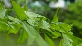 唯美下雨天树叶雨伞4k实拍视频素材视频素材