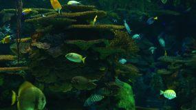 实拍海洋馆海底世界视频素材
