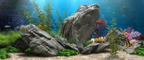 全息海洋动物海底世界视频素材