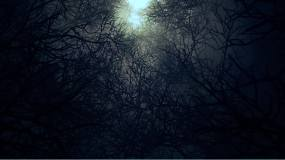 圣诞节夜晚死亡森林背景视频素材