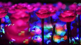 荷塘发光花朵视频素材