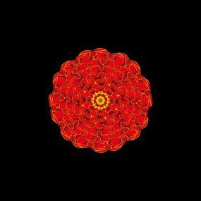 牡丹花花朵绽放透明通道视频素材