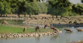 北京秋天麋鹿苑麋鹿群四不像悠闲吃草嬉戏视频素材