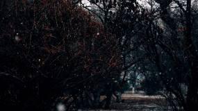 公园雪景红墙雪景视频素材