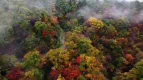 4k绝美峡谷河流小溪深秋枫叶红叶视频素材