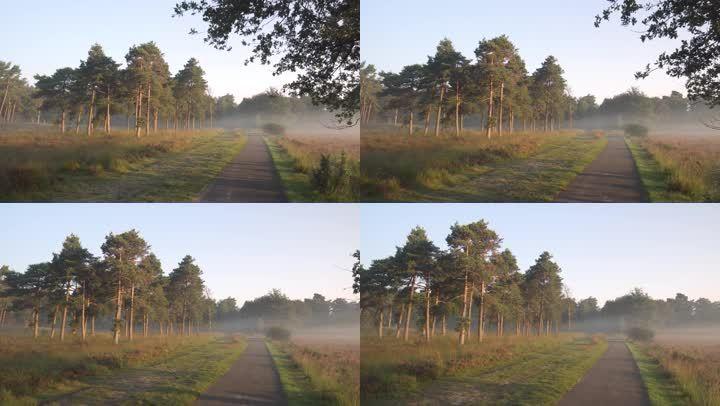 乡间小道晨雾户外下路农村美景