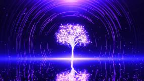 星空树视频素材