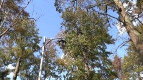 4K实拍大树林枫叶超长录制7组视频素材包