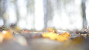 秋景时光视频素材