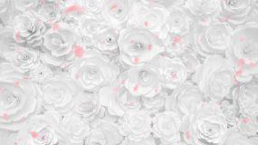 唯美浪漫白色玫瑰花墙大屏背景视频素材