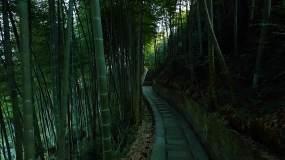竹林竹海唯美空镜,光影斑驳之美视频素材