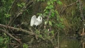 唯美鹭鸟镜头A视频素材