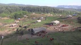 实拍贵州纳雍土鸡生态放养视频素材