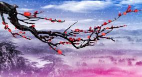 红梅飞雪傲雪红梅桃花视频素材