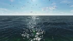 大海航行海鸥视频素材
