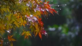 雨中的树叶素材空镜视频素材