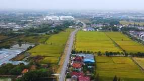 4K航拍乡村道路、稻田、浙江农村视频素材