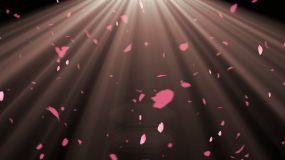 粉色花瓣光线alpha透明通道视频素材