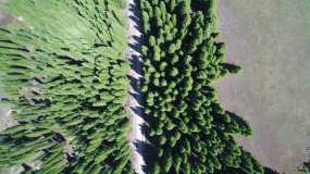 高清航拍房车穿越树林视频素材