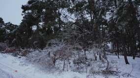 东北冰雪天气狂风暴雪视频素材