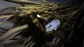 怀表和稻穗视频素材