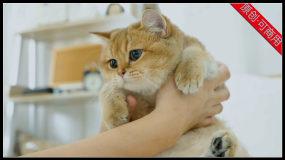【4K】各种萌猫咪视频合集萌猫动作表情视频素材