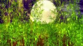 月光下的凤尾竹视频素材