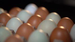 挑选鸡蛋实拍素材视频素材