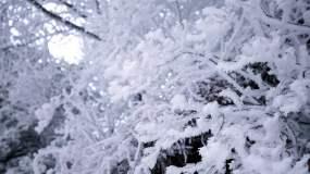 4K雾凇近景视频素材