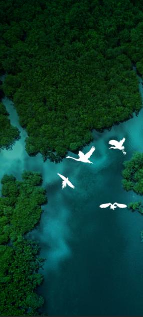 树林水波飞鸟动画视频素材
