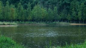 森林树林下雨雨水雨滴视频素材视频素材