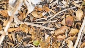秋天地上的枯叶视频素材
