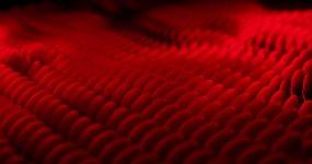 抽象红色鳞片视频素材