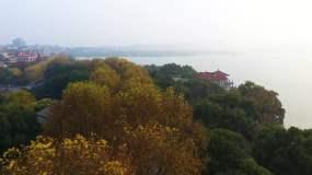 杭州西湖岸边秋天金黄色美景亭子航拍4K视频素材