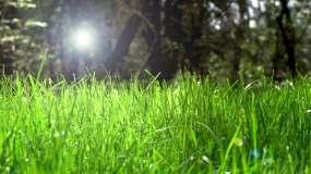 阳光下的小草视频素材