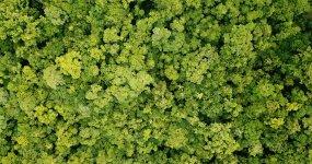 航拍森林视频素材