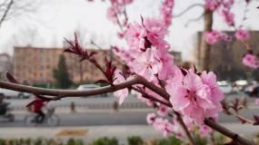 春天的小花园视频素材