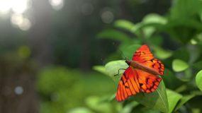 蝴蝶飞走了视频素材