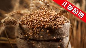 小麦农业麦田麦子麦穗农业农田丰收面粮食视频素材包