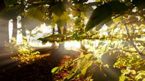 树木,草地,秋日阳光视频素材